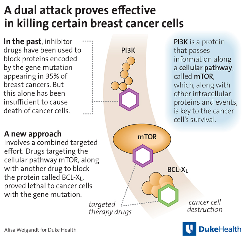 Breast cancer gene therapy